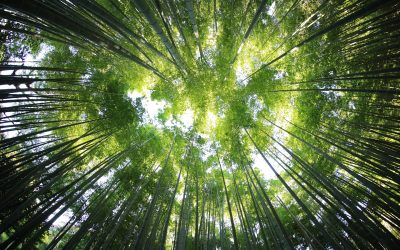 Même en forêt, le soleil brille